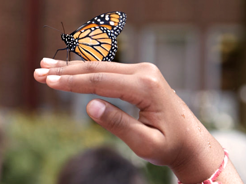 Butterfly on the Hand of a Columbus Academy student